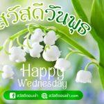 รูปสวัสดีตอนเช้าวันพุธสดใส พร้อมรูปดอกไม้สวยๆ Happy Wednesday