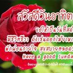 รูปสวัสดีทักทายตอนเช้าวันอาทิตย์สดใสยามเช้า รูปดอกไม้สีแดงสวยๆสดชื่น พร้อมข้อความอวยพร ขอให้เป็นวันที่สดใส มีชีวิตชีวา ดังเช่นดอกไม้ยามเช้า พักผ่อนกายใจ สุขสบายตลอดวัน Have a good Sunday!