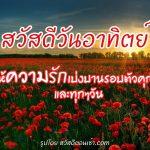 รูปสวัสดีวันอาทิตย์ พร้อมพื้นหลังดอกไม้สีแดง และคำทักทายความหมายดีๆ แบ่งปันความรัก
