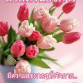 รูปดอกทิวลิปสีชมพูสวัสดีวันอังคารสวยๆ พร้อมคำอวยพร